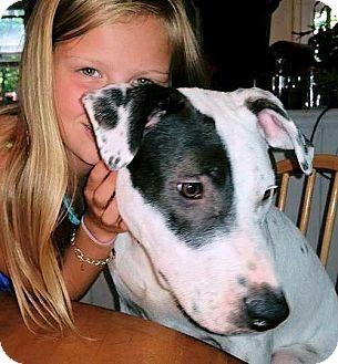 Labrador Retriever Mix Puppy for adoption in berwick, Maine - Sam