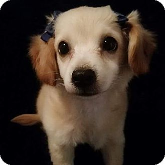 Terrier (Unknown Type, Small) Mix Puppy for adoption in Rancho Cucamonga, California - NaeNae