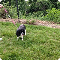 Adopt A Pet :: Mae Mae -Adopted! - Kannapolis, NC
