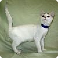 Adopt A Pet :: Sazzy - Powell, OH