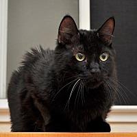 Adopt A Pet :: Cazader - Roseville, CA