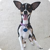 Adopt A Pet :: Etsy - AUSTIN, TX