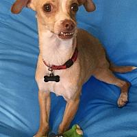 Adopt A Pet :: Prince Max - San Francisco, CA