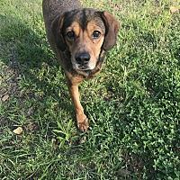 Adopt A Pet :: Sport - Jackson, MS