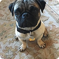 Adopt A Pet :: Nimoy - Austin, TX