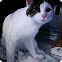 Adopt A Pet :: Toast - Trevose, PA
