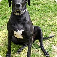 Adopt A Pet :: Onyx - Martinsburg, WV