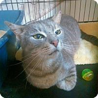 Adopt A Pet :: Samson - Brooklyn, NY