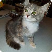 Adopt A Pet :: Trudi - Battle Ground, WA