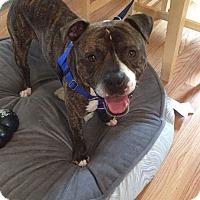Adopt A Pet :: Cedric - Villa Park, IL