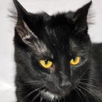 Adopt A Pet :: Maxine - Tilton, IL