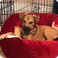 Adopt A Pet :: Emily - San Diego, CA