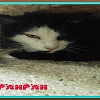 Adopt A Pet :: PANPAN - Fort Walton Beach, FL