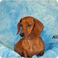 Adopt A Pet :: Allee - Ft. Myers, FL