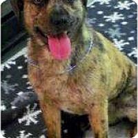 Adopt A Pet :: Tiger - Seattle, WA