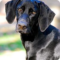 Adopt A Pet :: Betsy Sue - Randolph, NJ