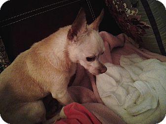Chihuahua Dog for adoption in Douglasville, Georgia - Peachie