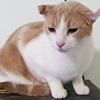 Adopt A Pet :: Harley - Sistersville, WV