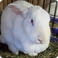 Adopt A Pet :: Ava - Williston, FL