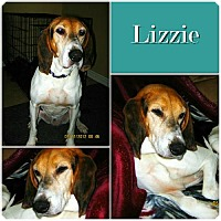 Adopt A Pet :: Lizzie IS ADOPTED! - Ontario, ON
