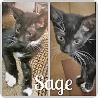 Adopt A Pet :: SageL - North Highlands, CA