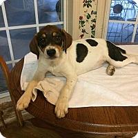 Adopt A Pet :: Lillie Taylor - Providence, RI