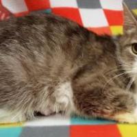 Adopt A Pet :: Bridget - Twinsburg, OH