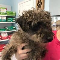 Adopt A Pet :: Addy - Gainesville, FL