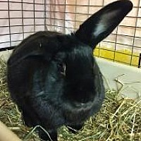 Adopt A Pet :: Wrigley - Woburn, MA
