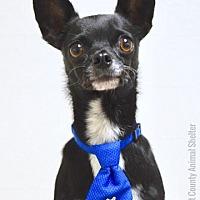 Adopt A Pet :: Mikah - Dublin, CA