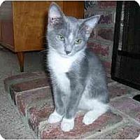 Adopt A Pet :: Tilly - Modesto, CA