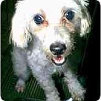 Adopt A Pet :: Torry - dewey, AZ