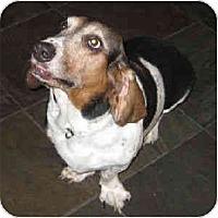 Adopt A Pet :: Danan - Phoenix, AZ