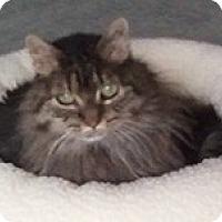 Adopt A Pet :: Bunny Sue - Anchorage, AK