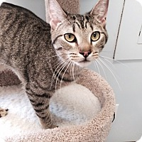 Adopt A Pet :: Turbo - McDonough, GA
