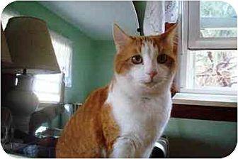 Domestic Shorthair Cat for adoption in Balto, Maryland - Tony