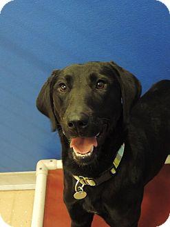 Labrador Retriever Mix Dog for adoption in Brookings, South Dakota - Sasha