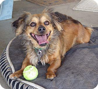 Dachshund Mix Dog for adoption in Quail Valley, California - Riley