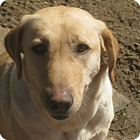 Adopt A Pet :: Danielle - Derry, NH