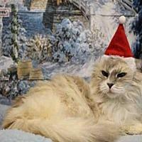 Adopt A Pet :: MARIE - Fairfield, CA