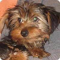 Adopt A Pet :: Sam - Greenville, RI