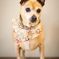 Adopt A Pet :: Carmelo - in Foster Care - Chino Hills, CA