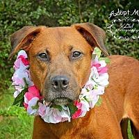 Adopt A Pet :: Barbara Jean - CRANSTON, RI