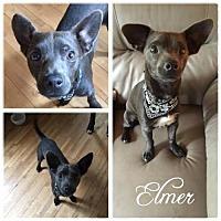 Adopt A Pet :: Elmer - Hope, BC