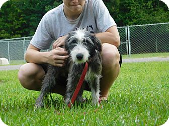 Terrier (Unknown Type, Small) Mix Dog for adoption in Oakdale, Louisiana - Lucky
