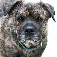 Adopt A Pet :: Dukester - San Diego, CA
