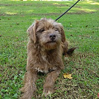 Adopt A Pet :: Mechuda - Lawrenceville, GA