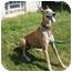 Photo 2 - Greyhound Dog for adoption in Fremont, Ohio - Red