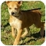 Photo 1 - Husky Mix Puppy for adoption in Harrisonburg, Virginia - Annabell