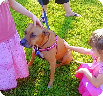 Pit Bull Terrier Mix Dog for adoption in Mary Esther, Florida - Saffie